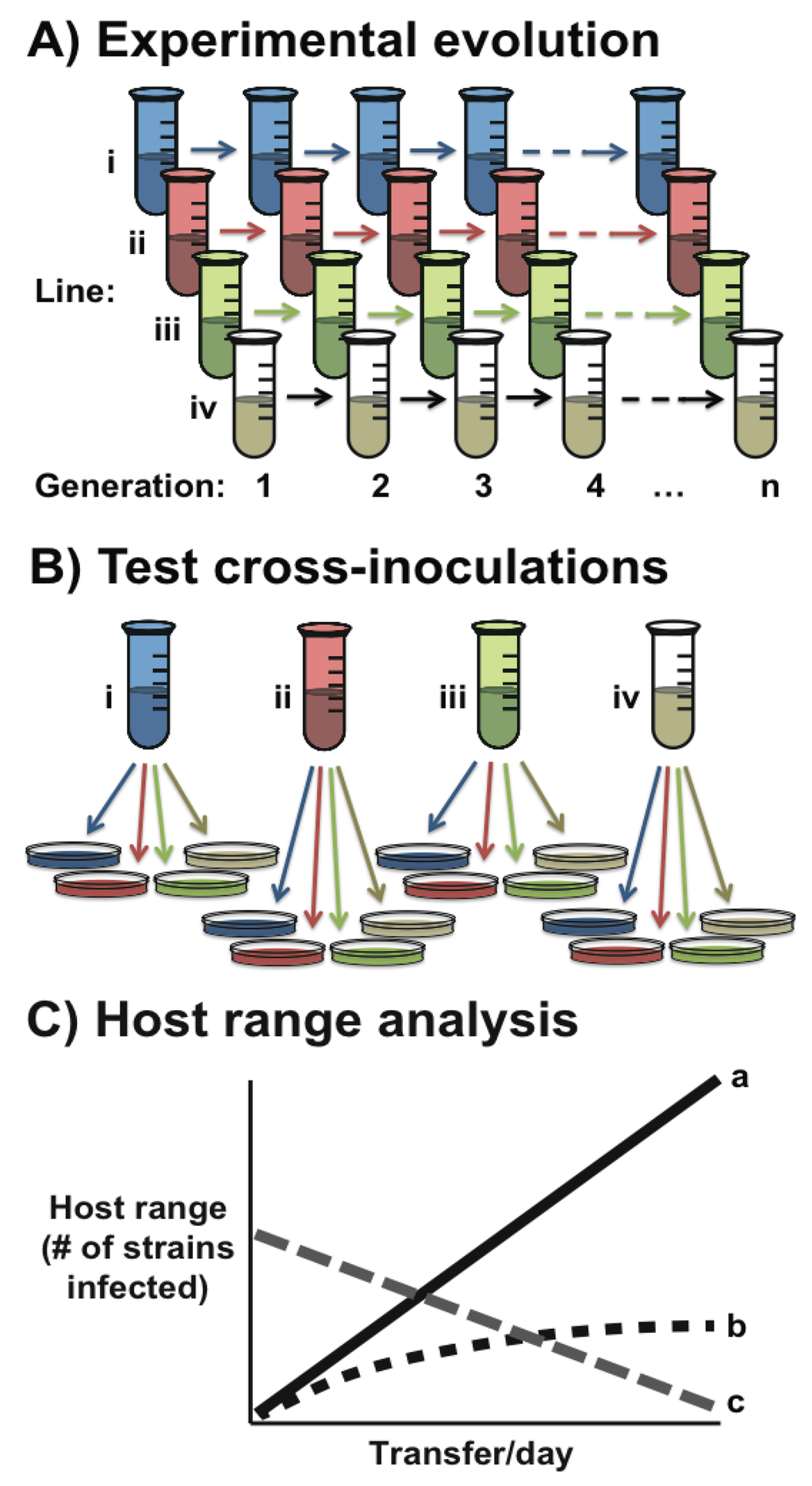 Pleiotropy Natural Selection And The Evolution Of Senescence