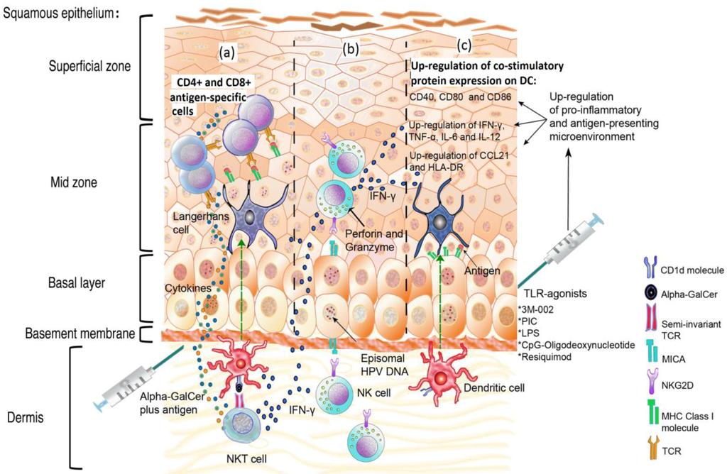 Full-Text | Rol... Human Papillomavirus (hpv)