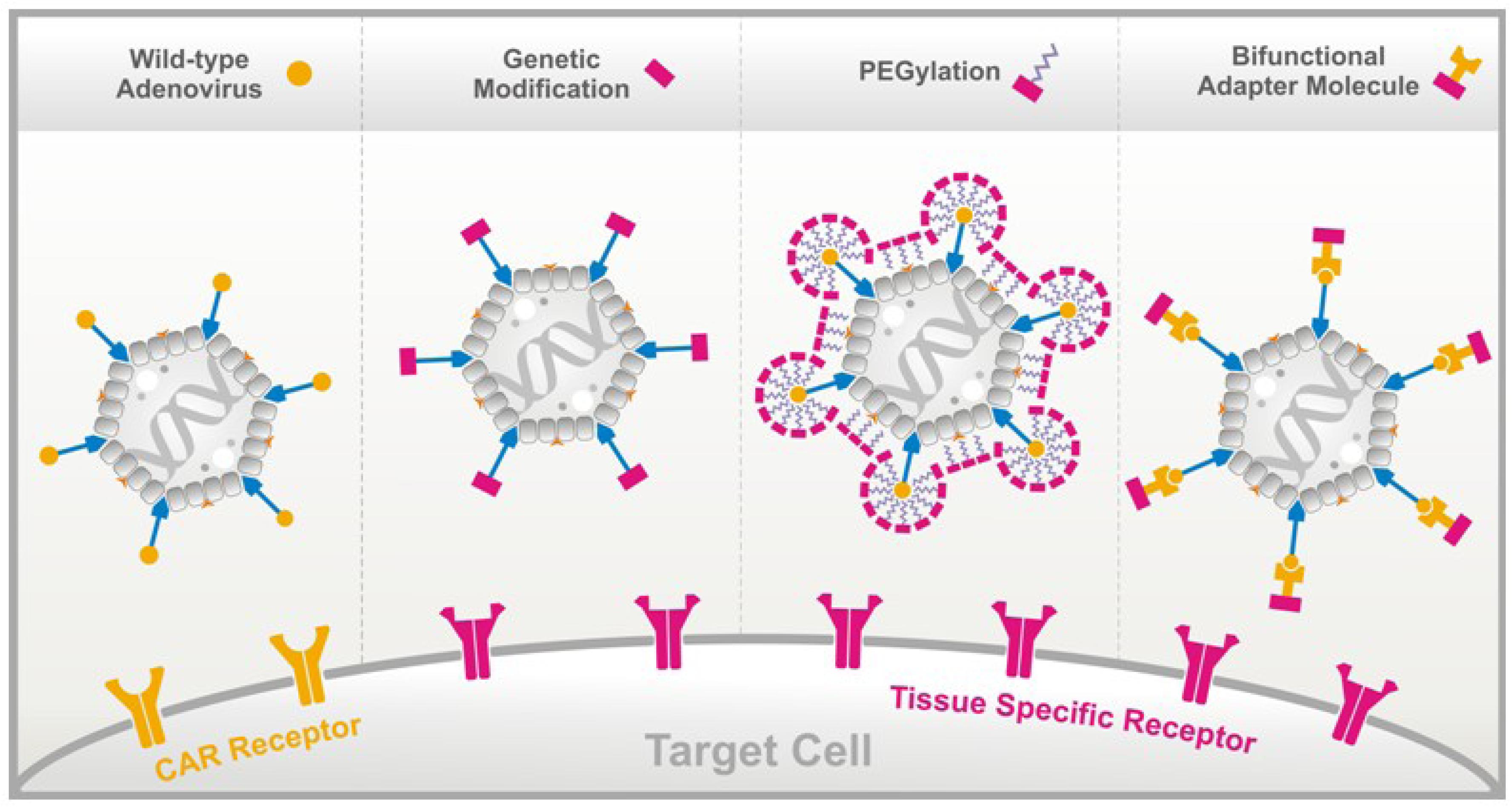 Viruses   Free Full-Text   Peptide-Based Technologies to Alter ...