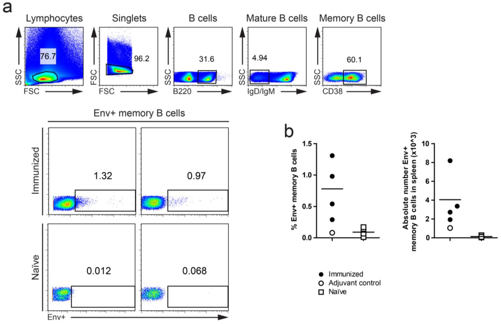 Viruses Free Full Text Hiv 1 Env Specific Memory And