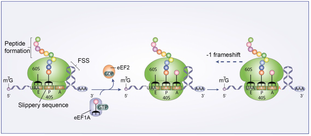 Viruses Free Full Text Hiv 1 Replication And The Cellular