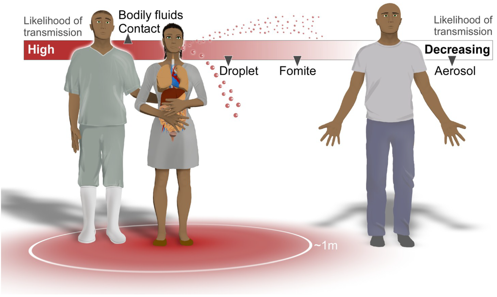 an analysis of the characteristics transmission and types of the ebola virus † interhuman spread of ebola virus in the african epi- demics has been very extensive among medical staff, often resulting in closure of hospitals and clinics.