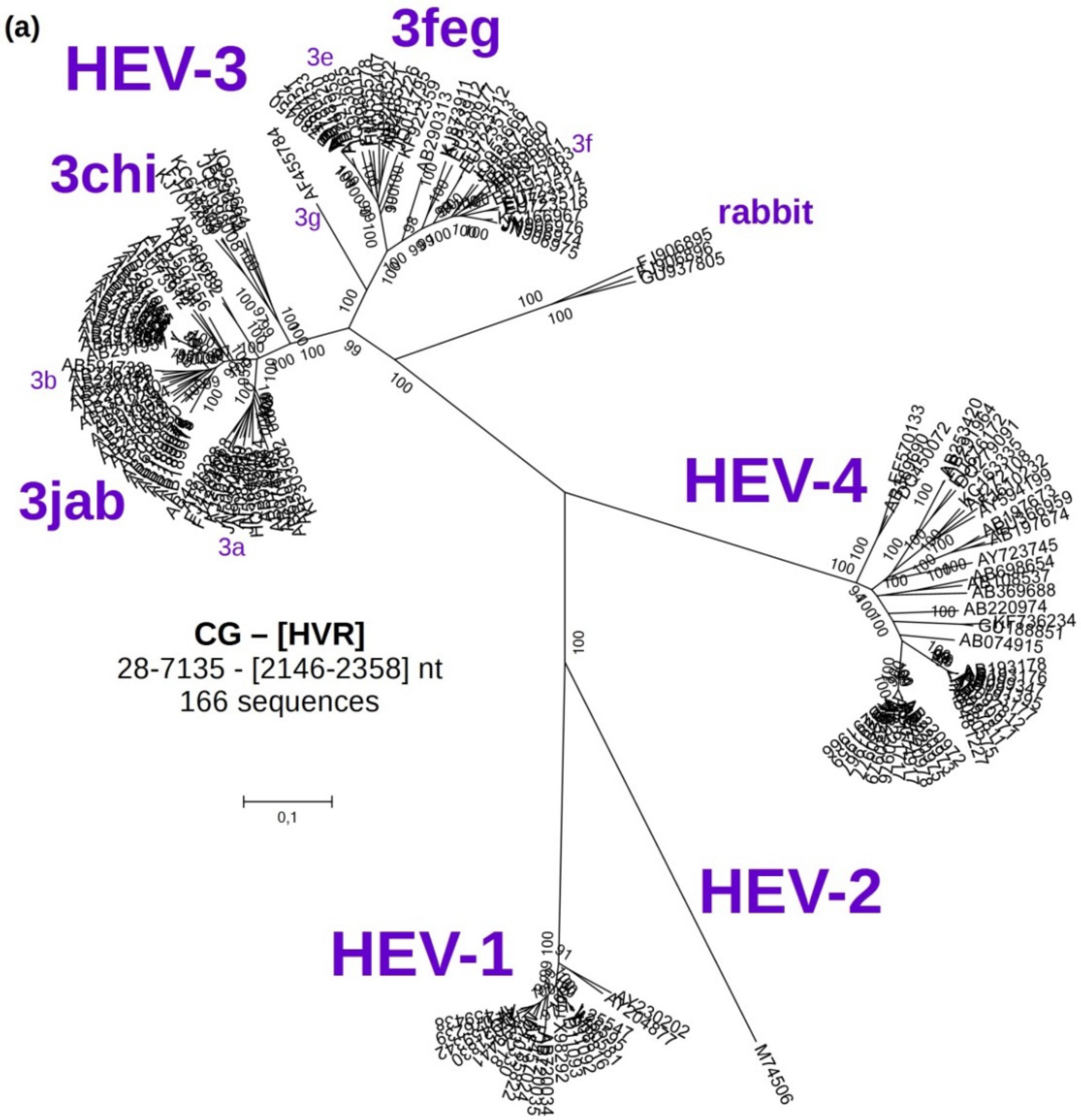 worksheet Viruses Worksheet viruses free full text hepatitis e virus genotype 3 diversity 07 02704 g001a 1024