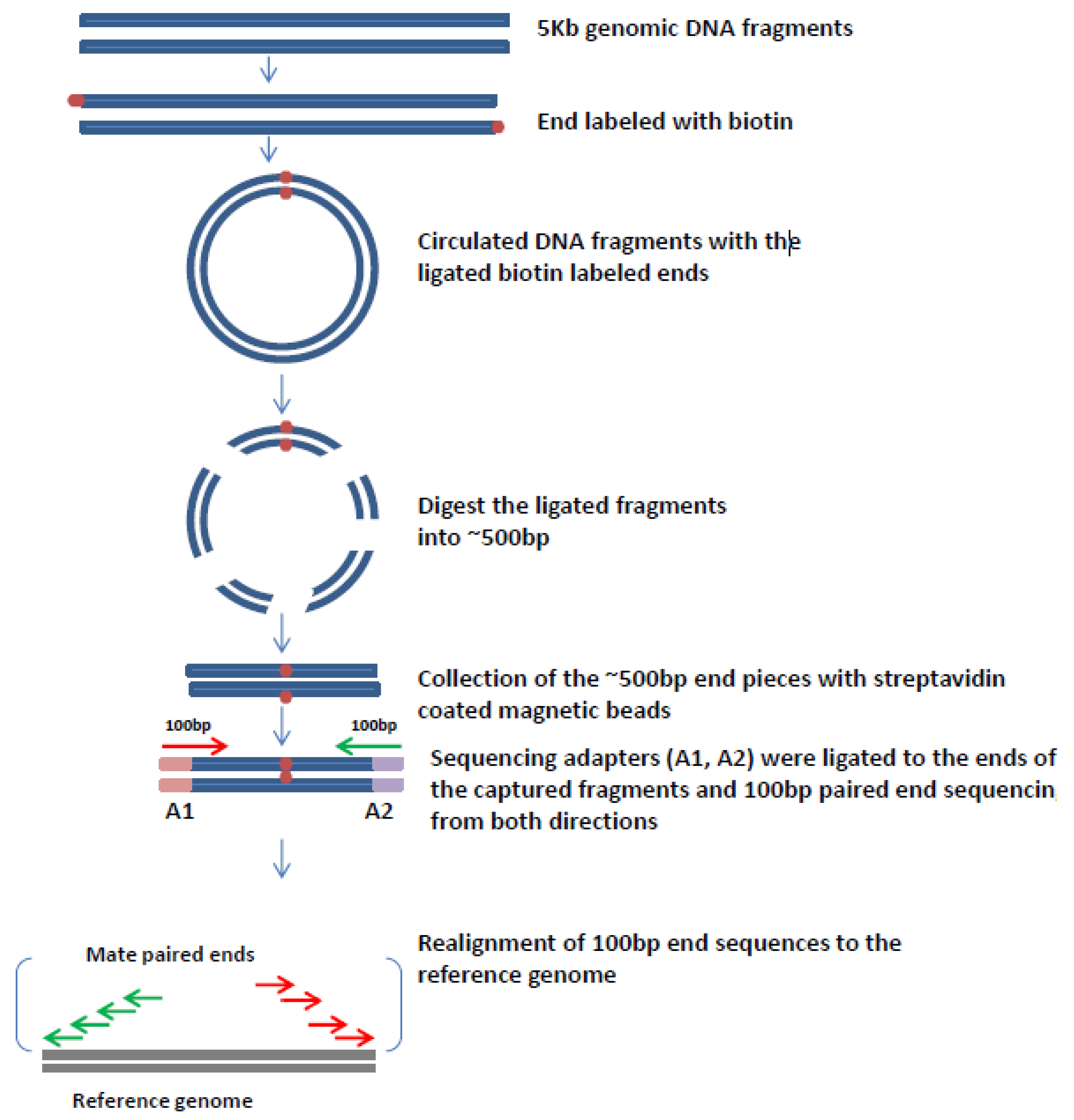 Viruses | Free Full-Text | Mate-Pair Sequencing as a