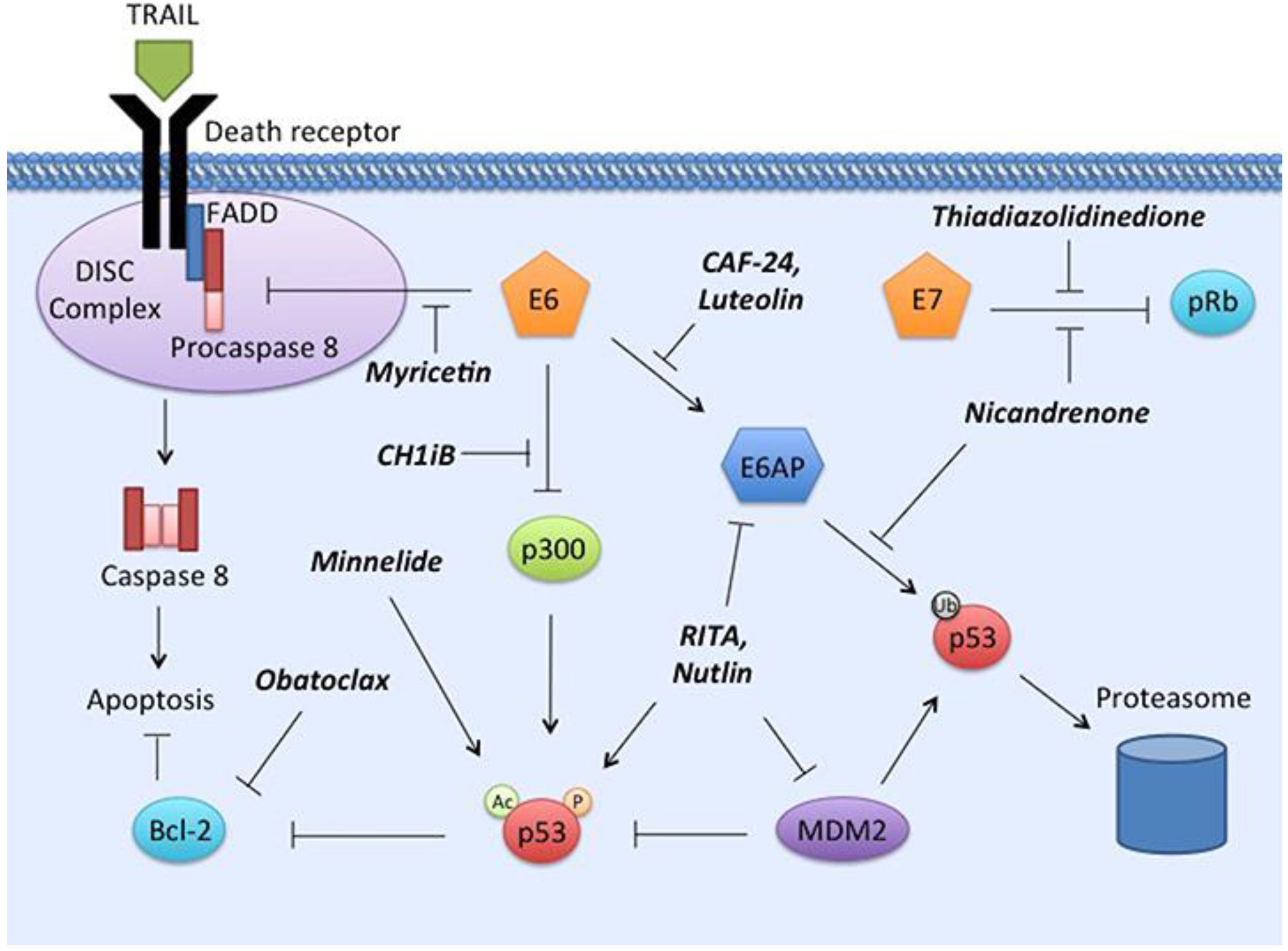 Viruses | Free Full-Text | Recent Progress in Therapeutic Treatments