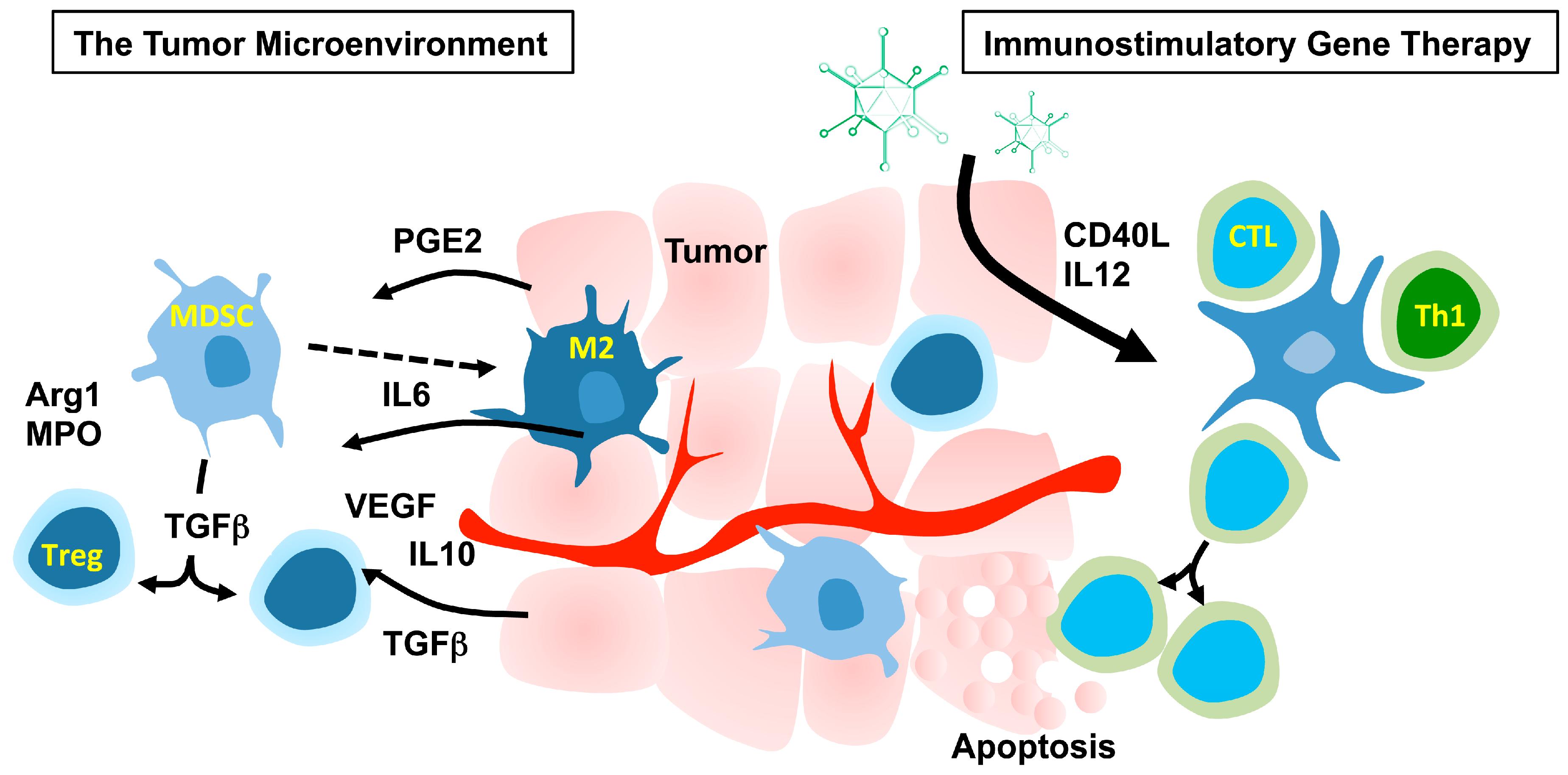 Viruses | Free Full-Text | Immunostimulatory Gene Therapy Using