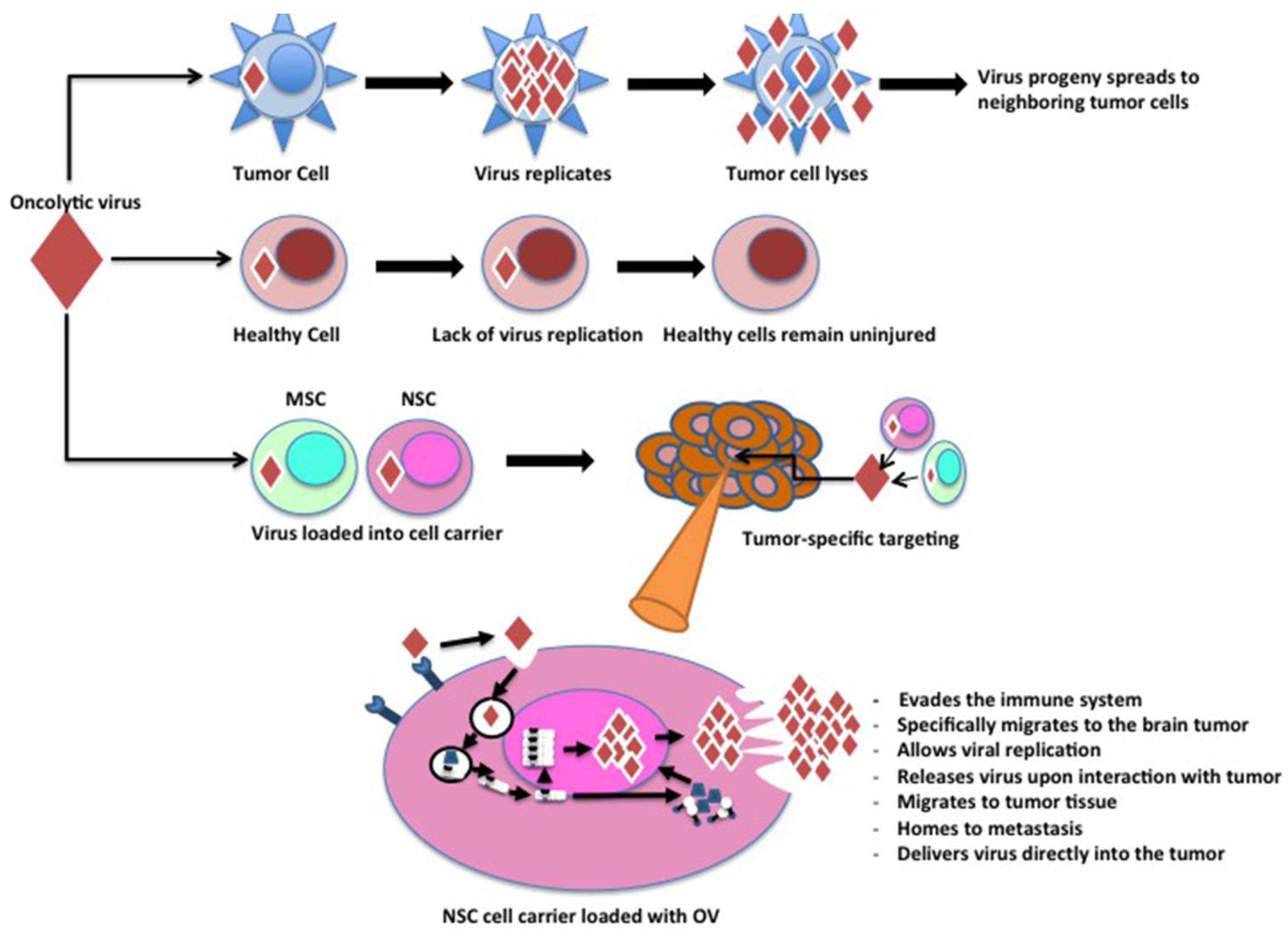 Viruses   Free Full-Text   Stem Cell-Based Cell Carrier for