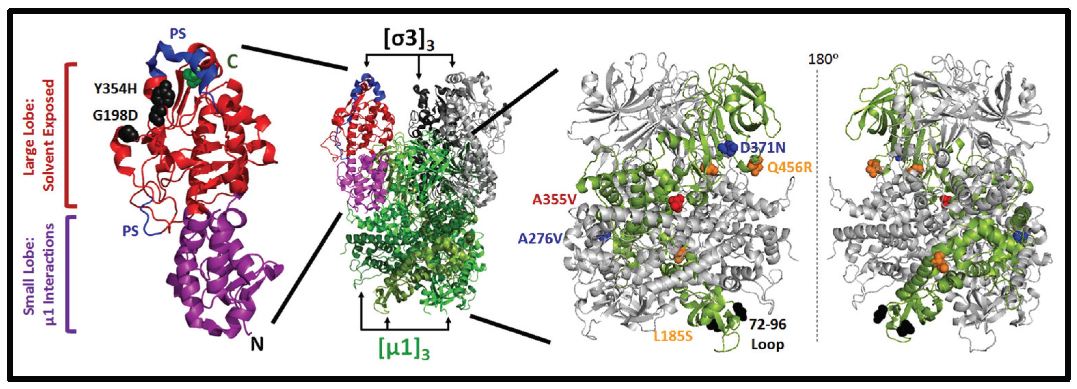 Viruses   Free Full-Text   Potential for Improving Potency
