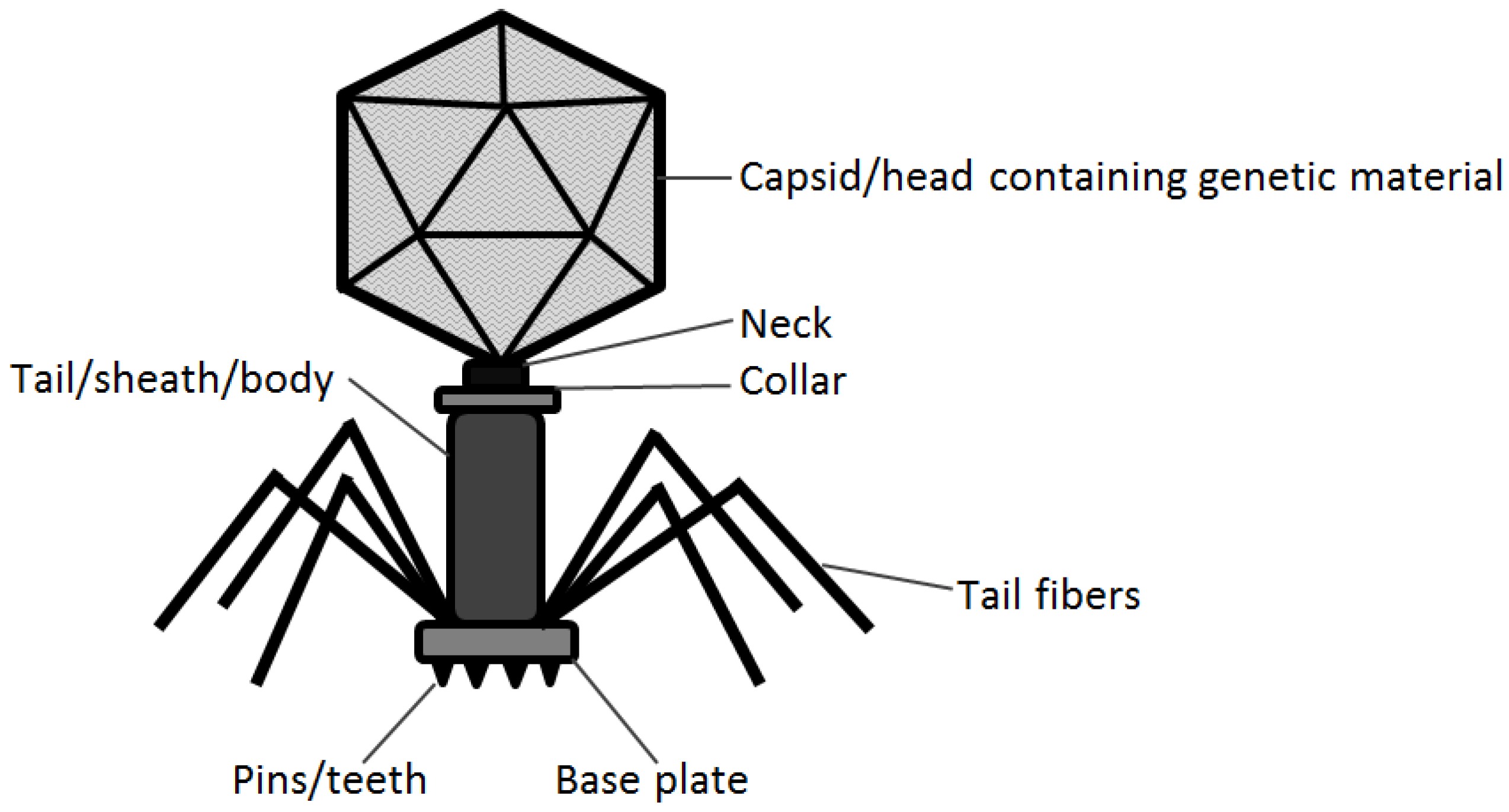 phage lab Welcome to the sullivan lab  complemented by developing and studying model phage-host systems in the lab with the goal of generating the data required for .