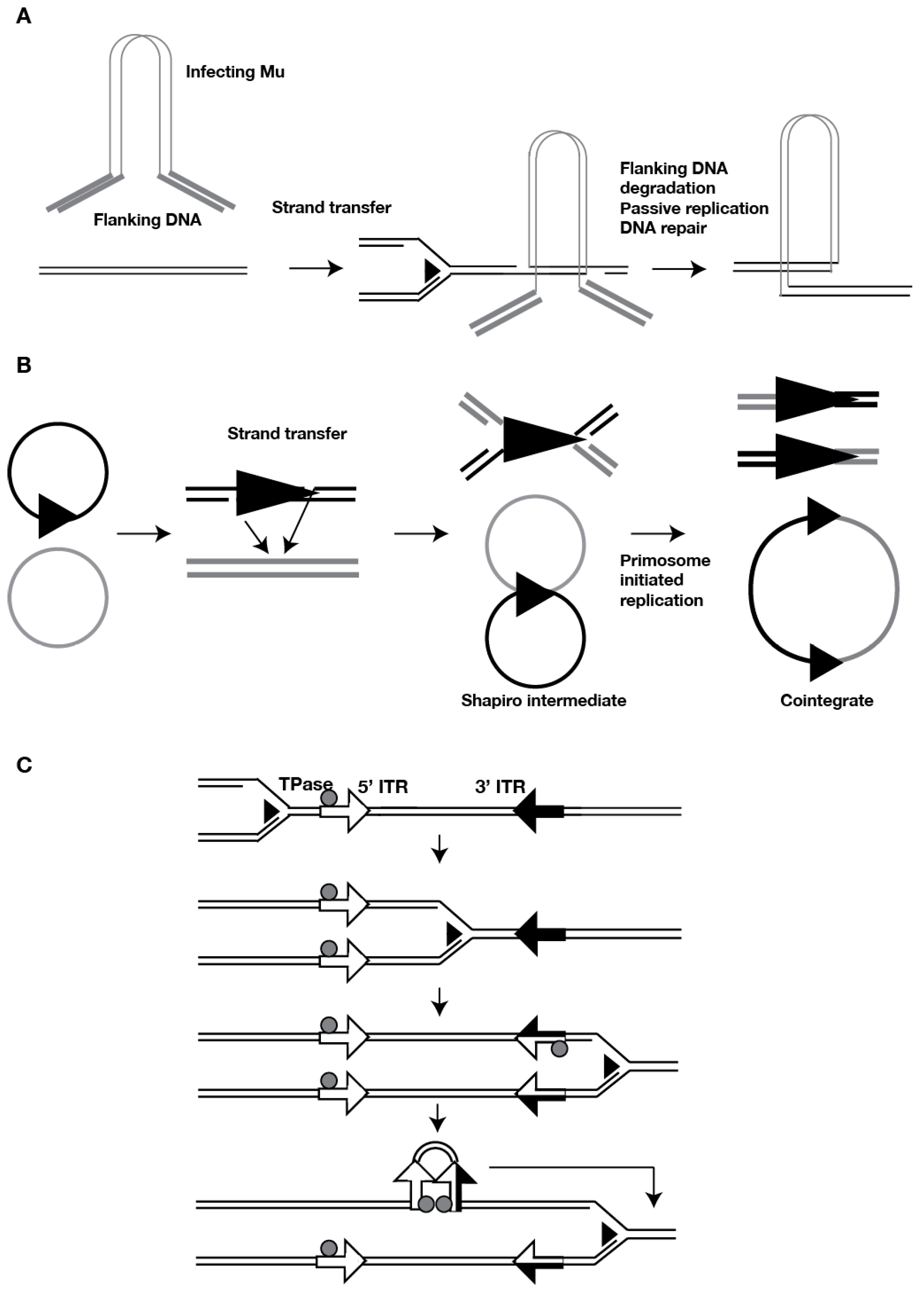 viruses full text cross regulation between transposable no
