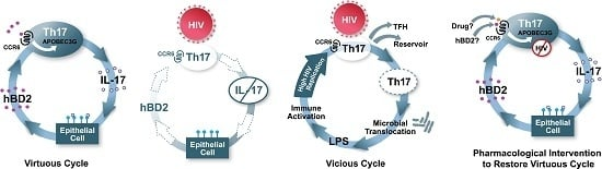 Human Beta Defensin 2 Selectively Inhibits HIV-1 in Highly Permissive CCR6 CD4  T Cells
