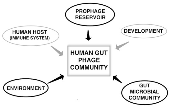 The Human Gut Phage Community and Its Implications for Health and Disease