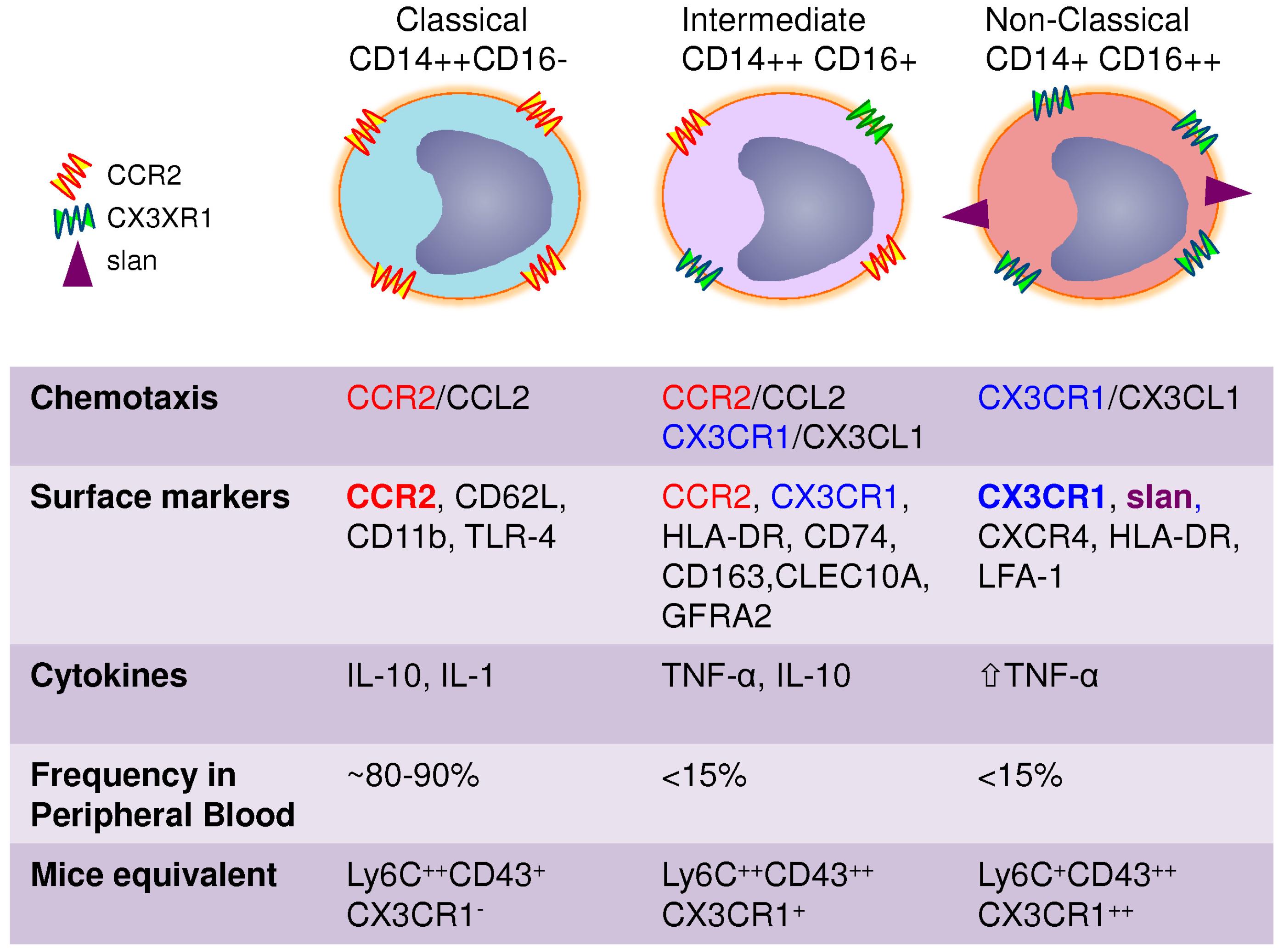 high abs monocytes