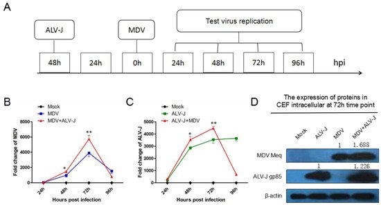 Viruses | May 2018 - Browse Articles