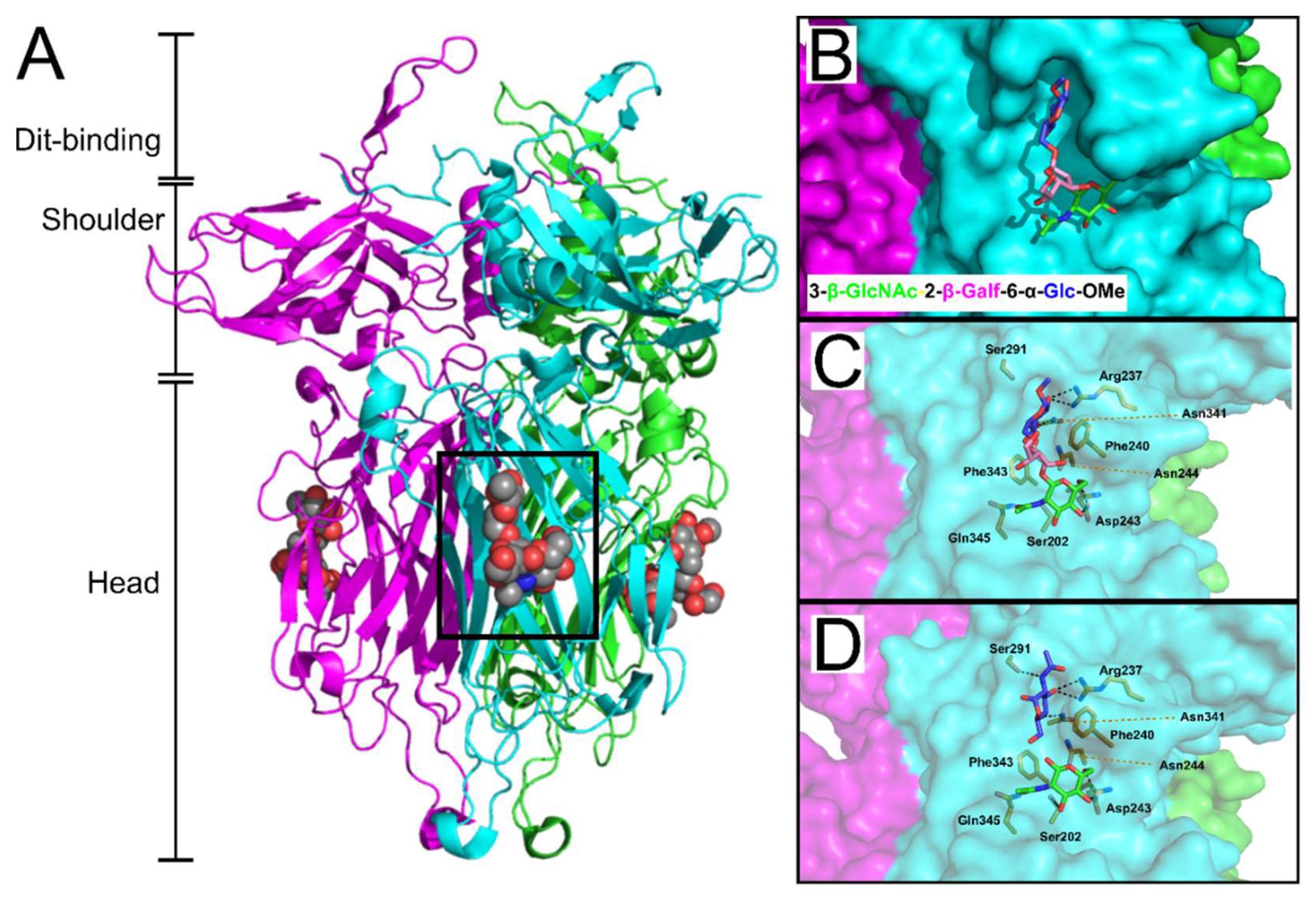 Viruses   Free Full-Text   Molecular Basis of Bacterial Host