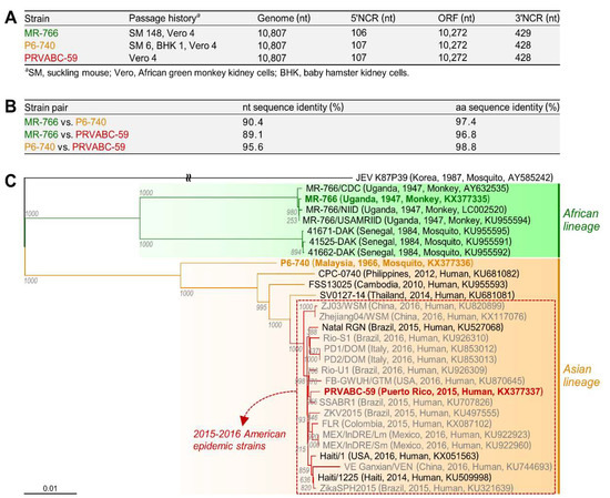 Viruses   Free Full-Text   Functional Genomics and