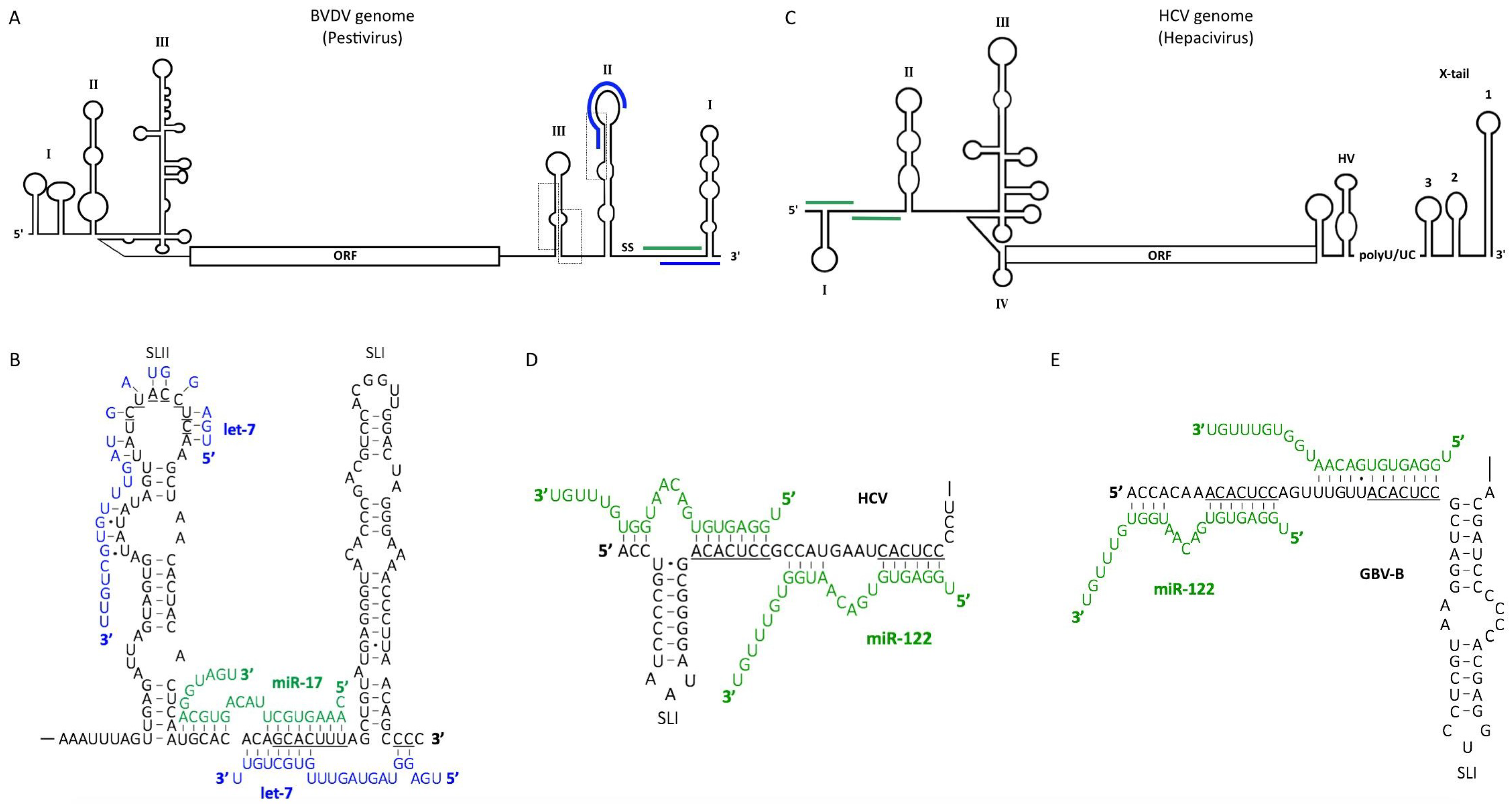 Viruses | Free Full-Text | The Diverse Roles of microRNAs at