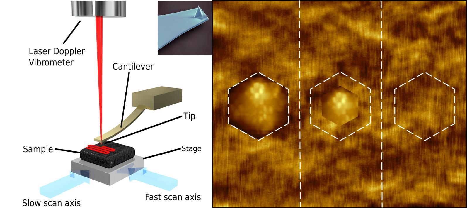 Viruses | Free Full-Text | Algal Viruses: The (Atomic) Shape