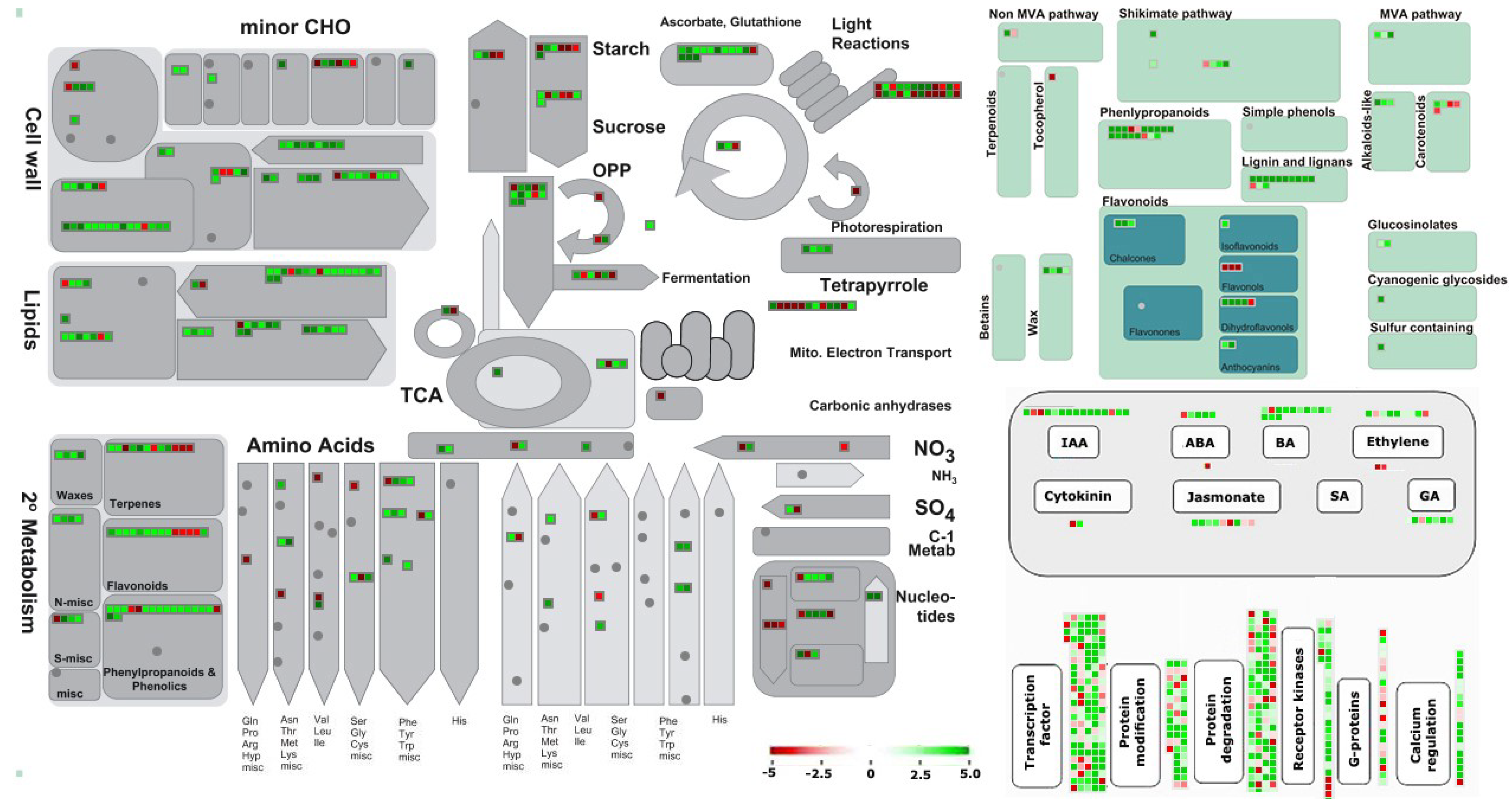 Viruses | Free Full-Text | Genome-Wide Transcriptomic Analysis