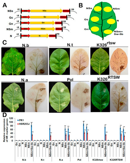 Viruses | Special Issue : Plant Immunity to Virus Infections