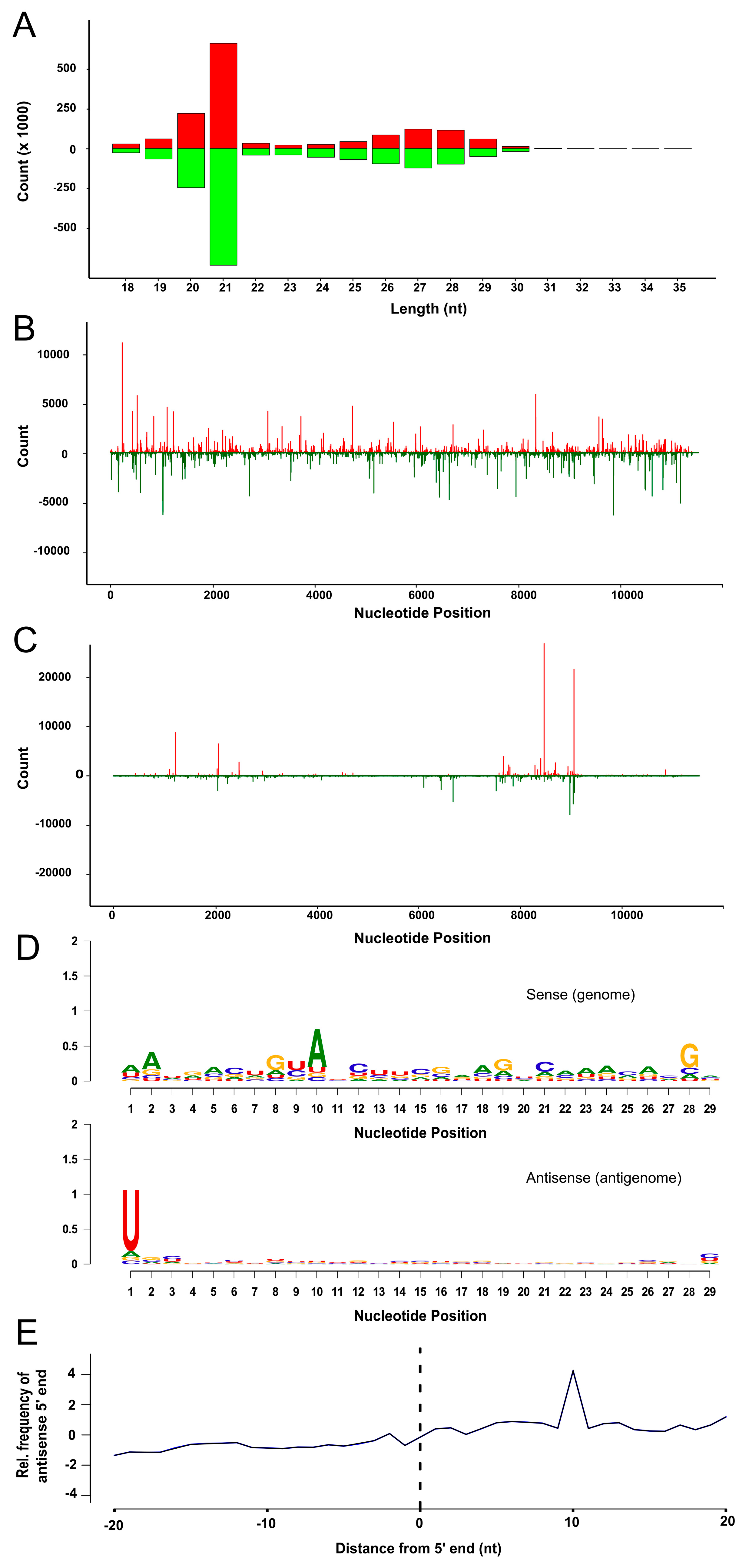 Viruses   Free Full-Text   Antiviral RNA Interference Activity in