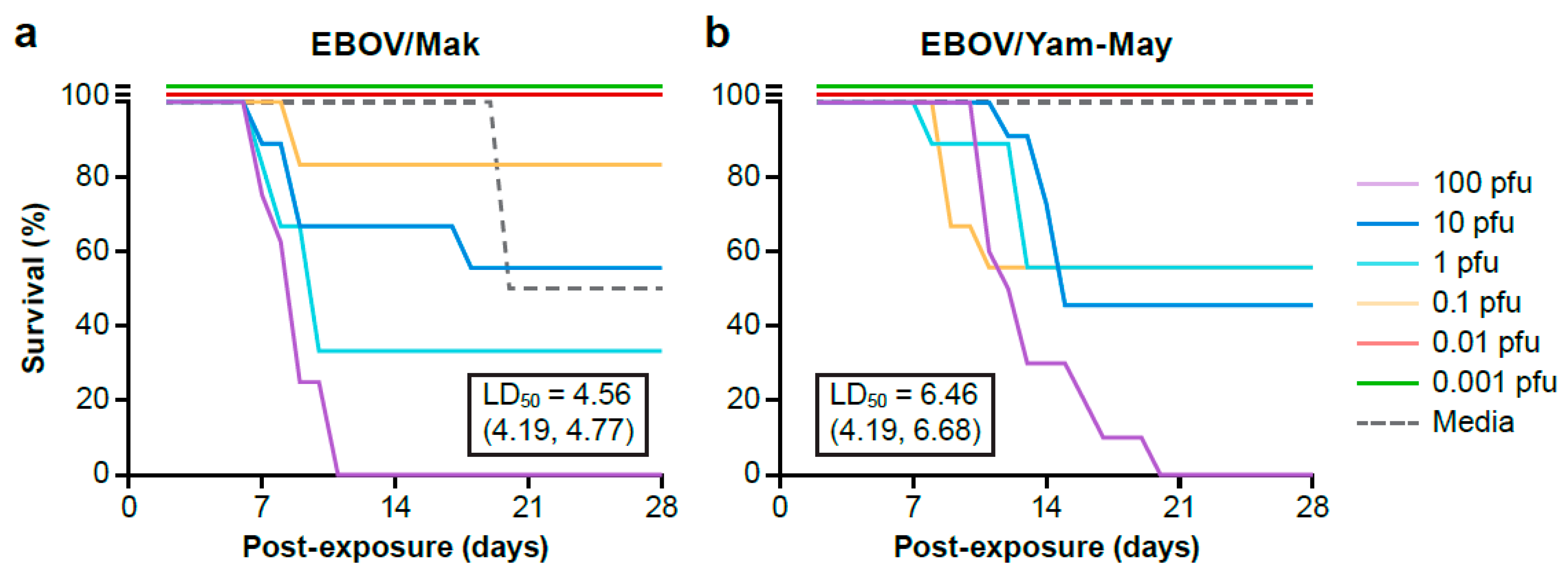Viruses   Free Full-Text   Ebola Virus Isolation Using Huh-7