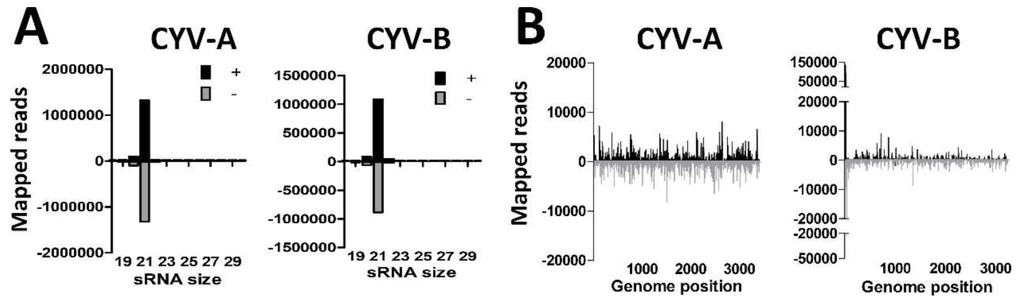 Viruses | Free Full-Text | Mosquito Small RNA Responses to West Nile
