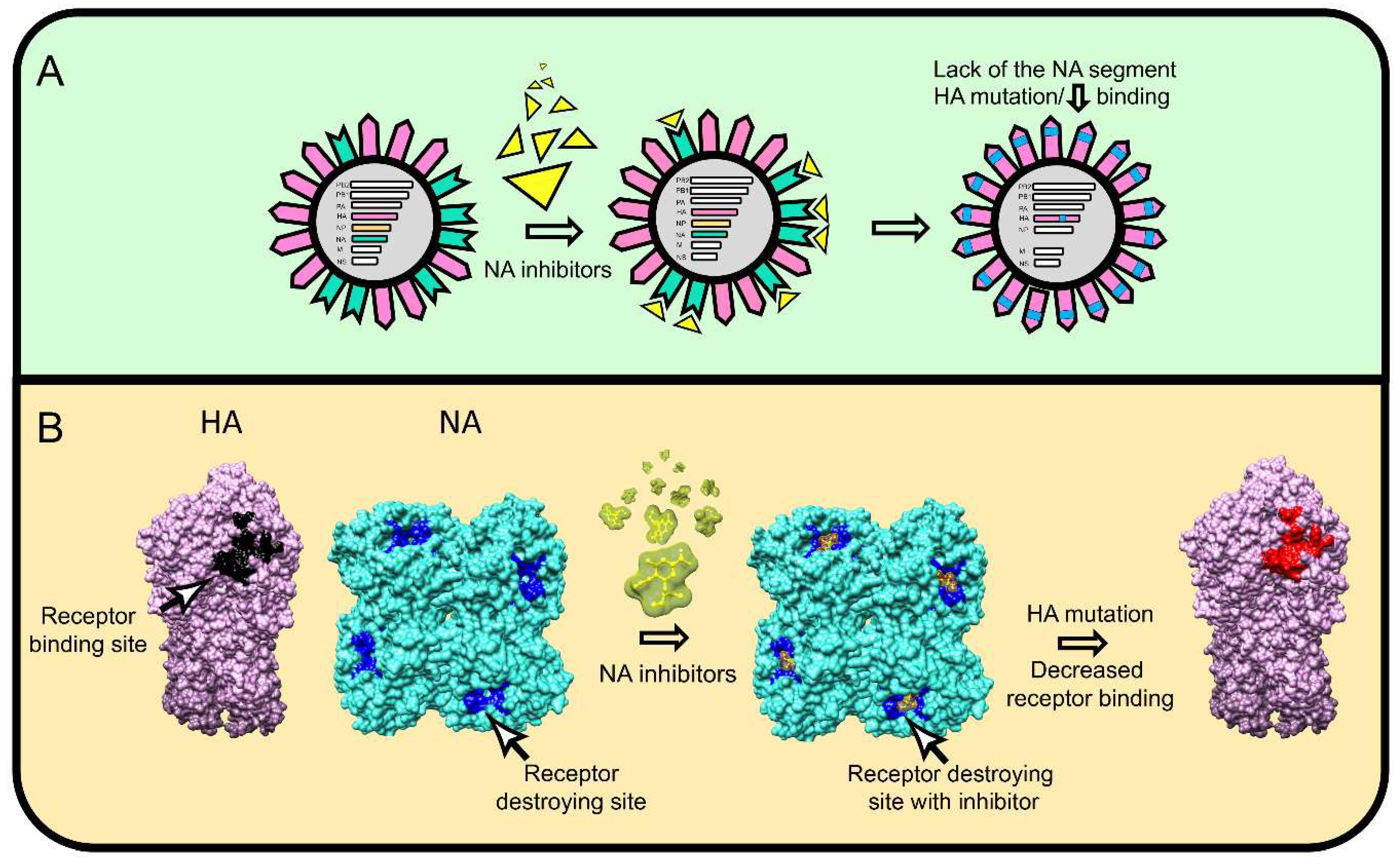 hemagglutinin diagram viruses free full text influenza hemagglutinin and  influenza hemagglutinin