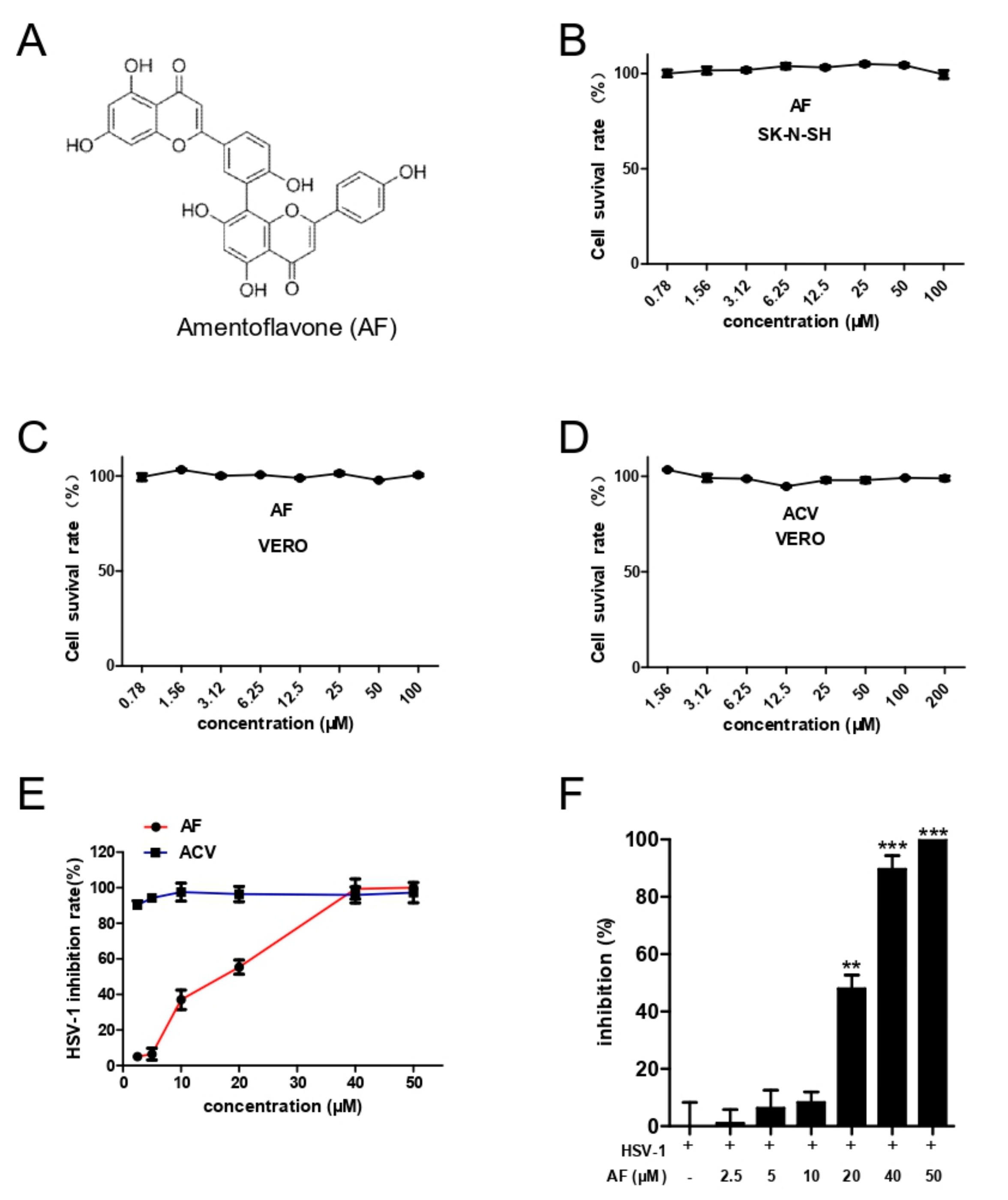 Viruses   Free Full-Text   Amentoflavone Inhibits HSV-1 and