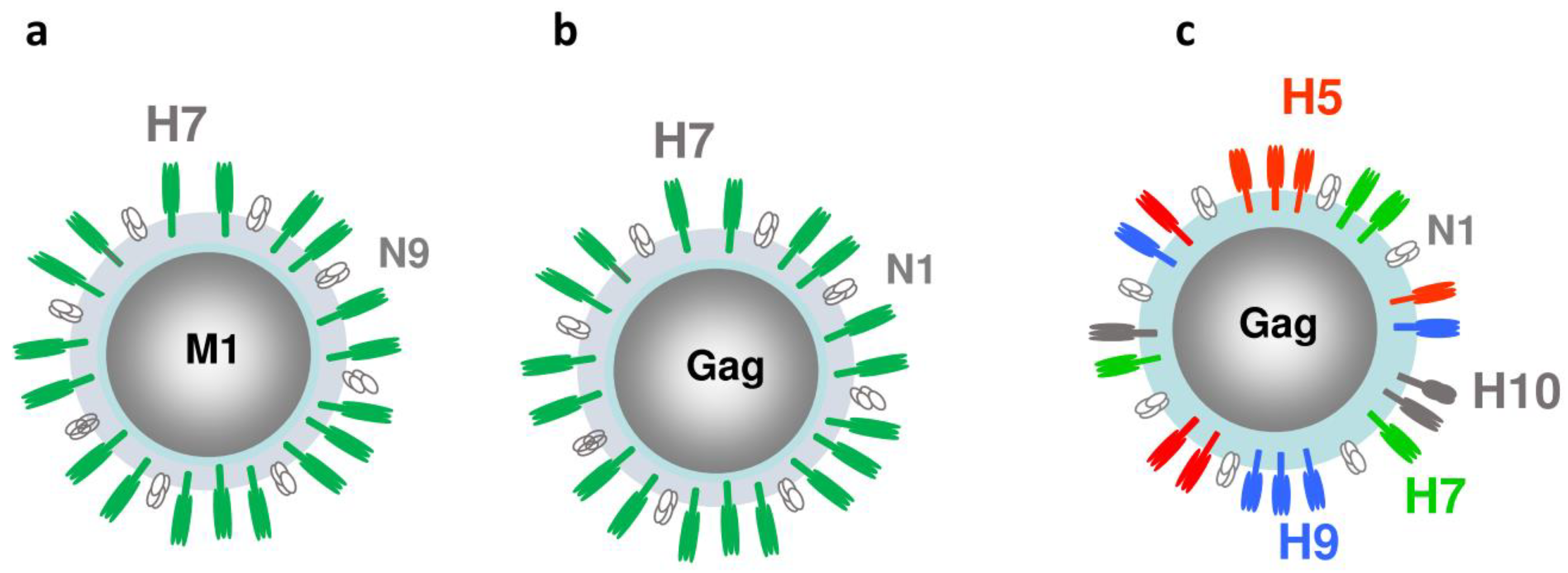 Viruses | Free Full-Text | Influenza Virus Like Particles (VLPs):  Opportunities for H7N9 Vaccine Development | HTML