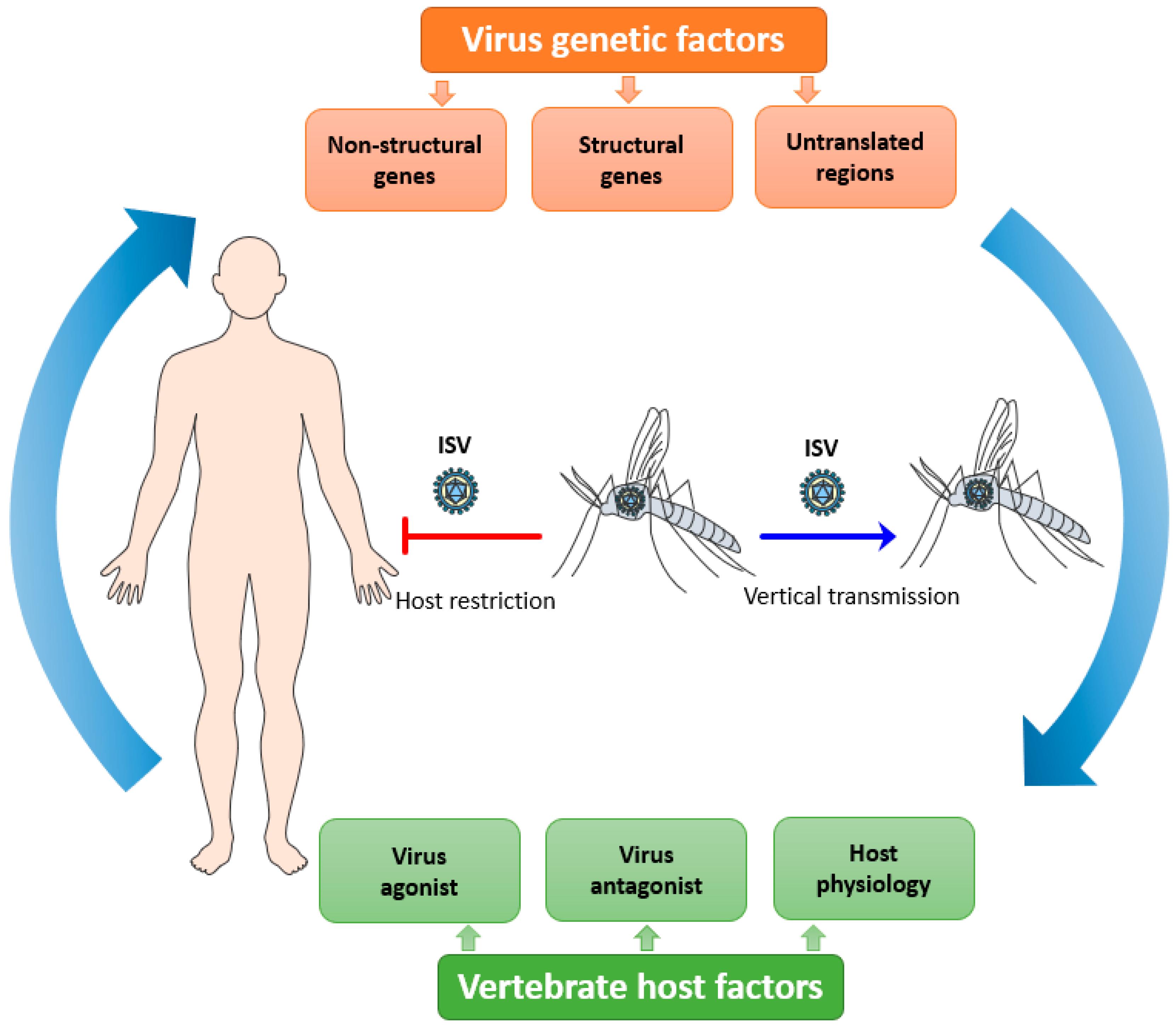 Viruses 12 00964 g001