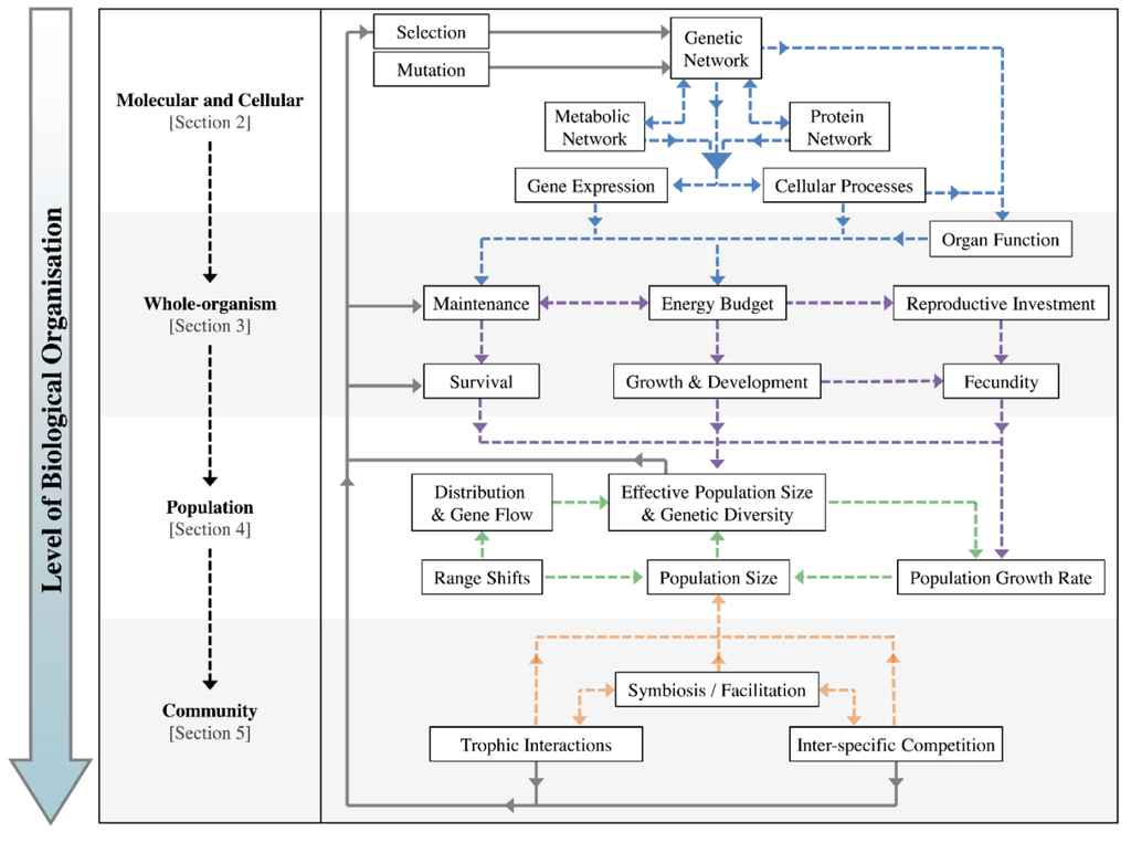 how adaption is important from an evolutionary perspective In this review, we will discuss the importance of raas, focusing on its evolution  and its critical importance for adaptation of vertebrates to a.