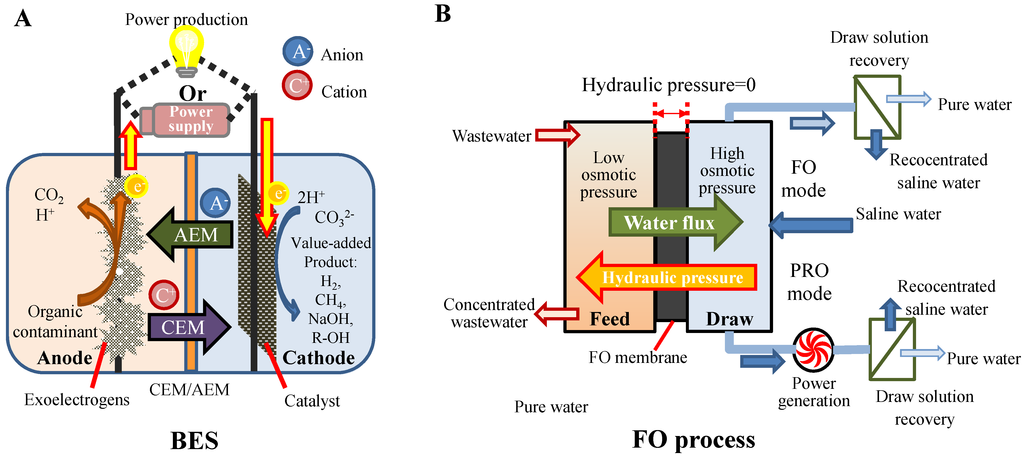 Water Free Full Text When Bioelectrochemical Systems