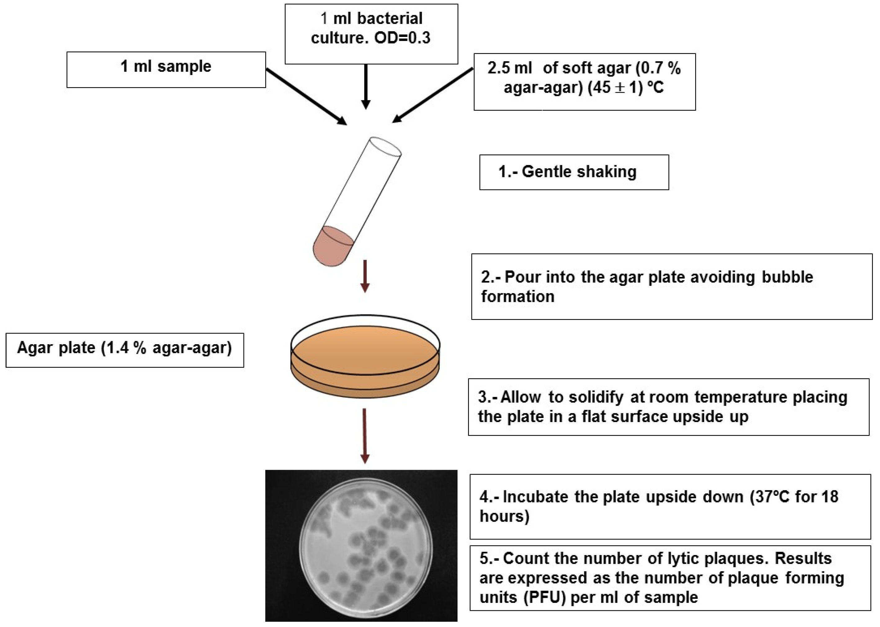 Water Free Full Text Coliphages As Model Organisms In The