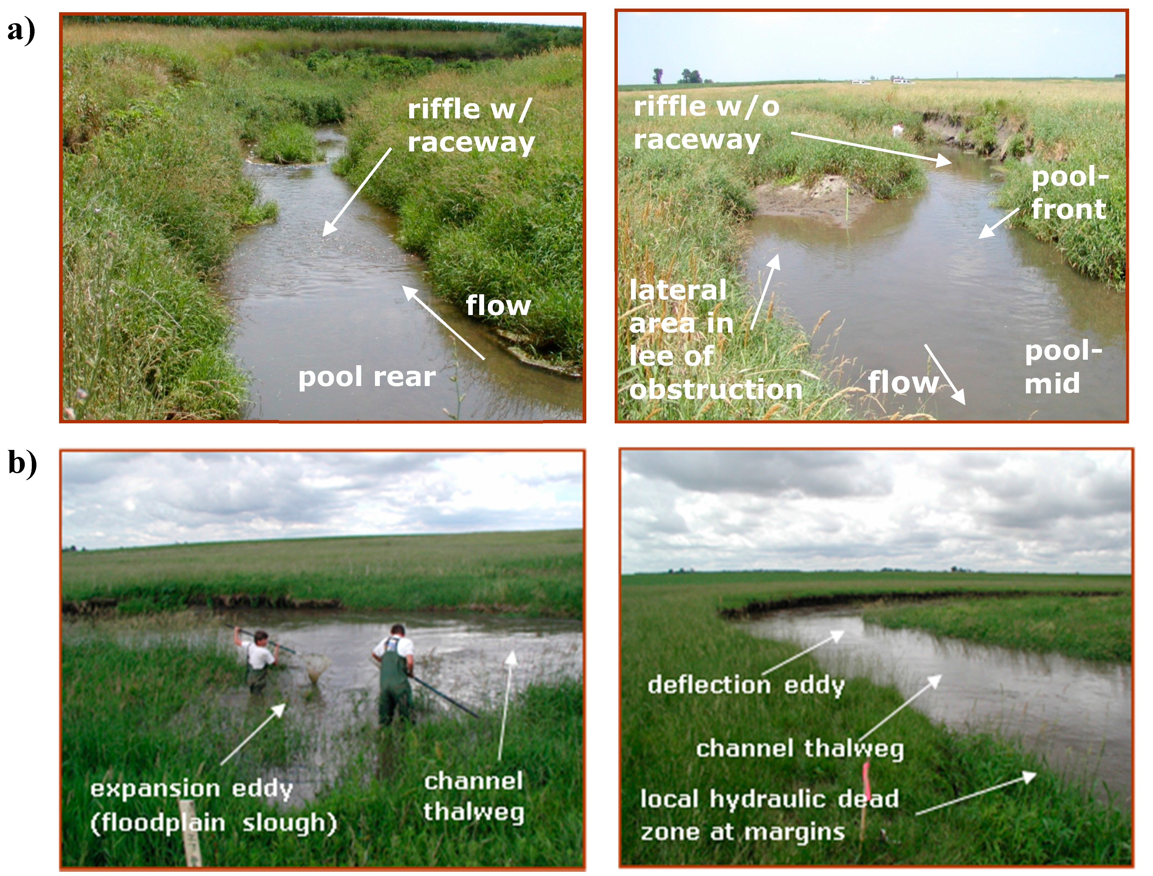 Water | Free Full-Text | Use of Ecohydraulic-Based