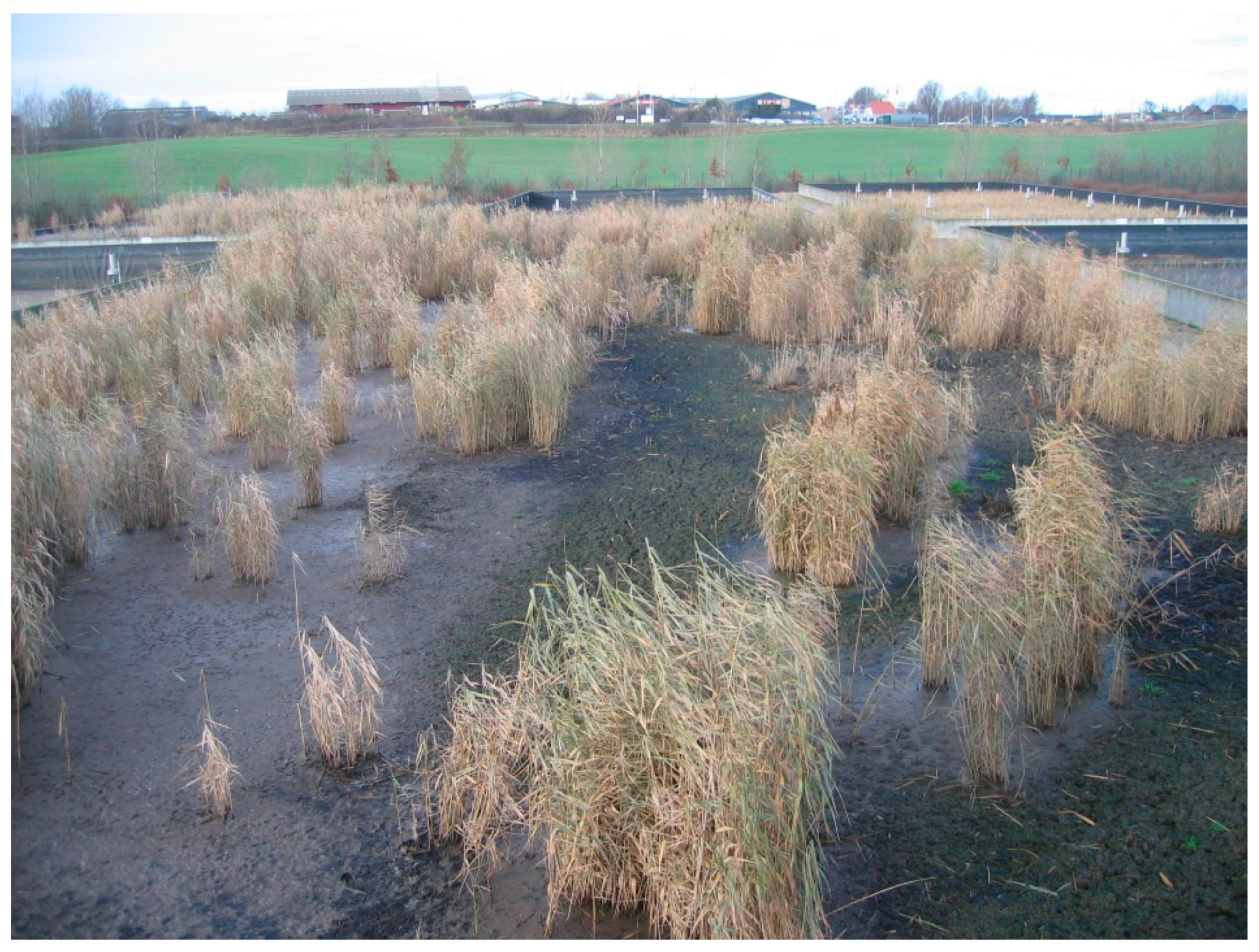 Water Free Full Text Sludge Dewatering And Mineralization In Sludge Treatment Reed Beds Html