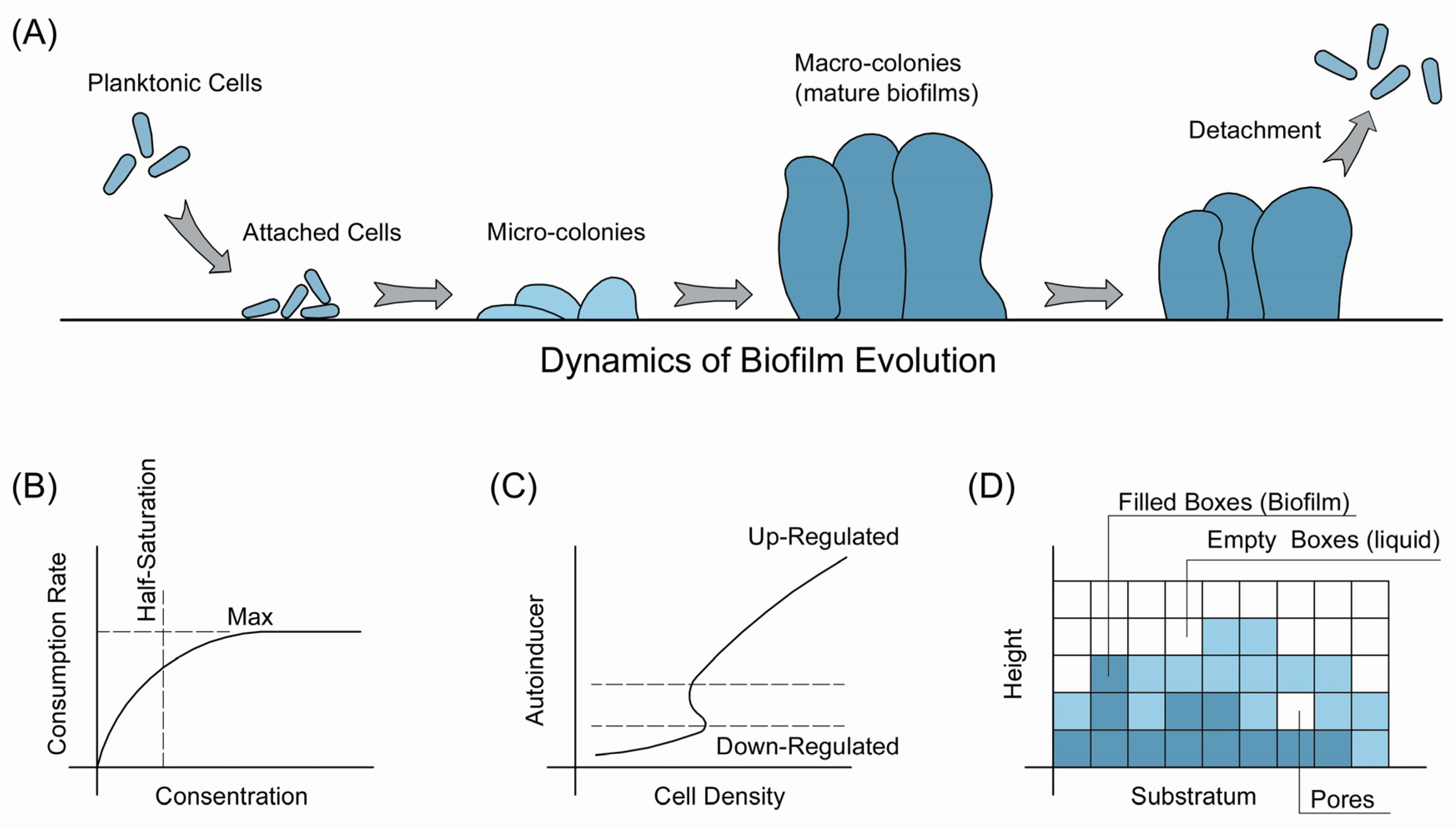 Water free full text modeling biofilms in water systems with new water 09 00462 g001 falaconquin