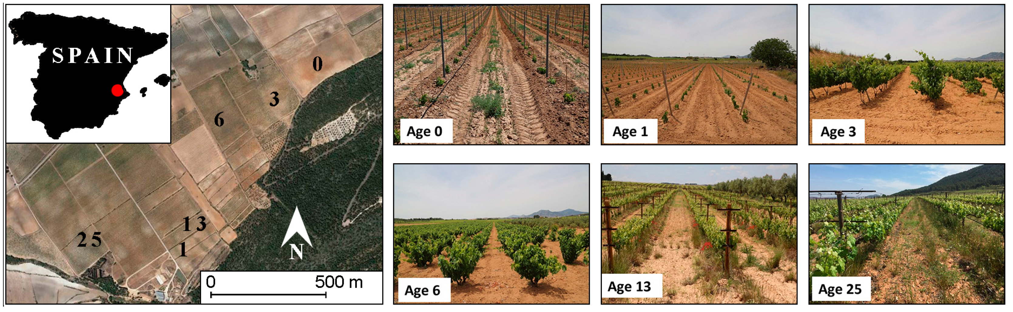 Water free full text the impact of the age of vines on soil no fandeluxe Gallery