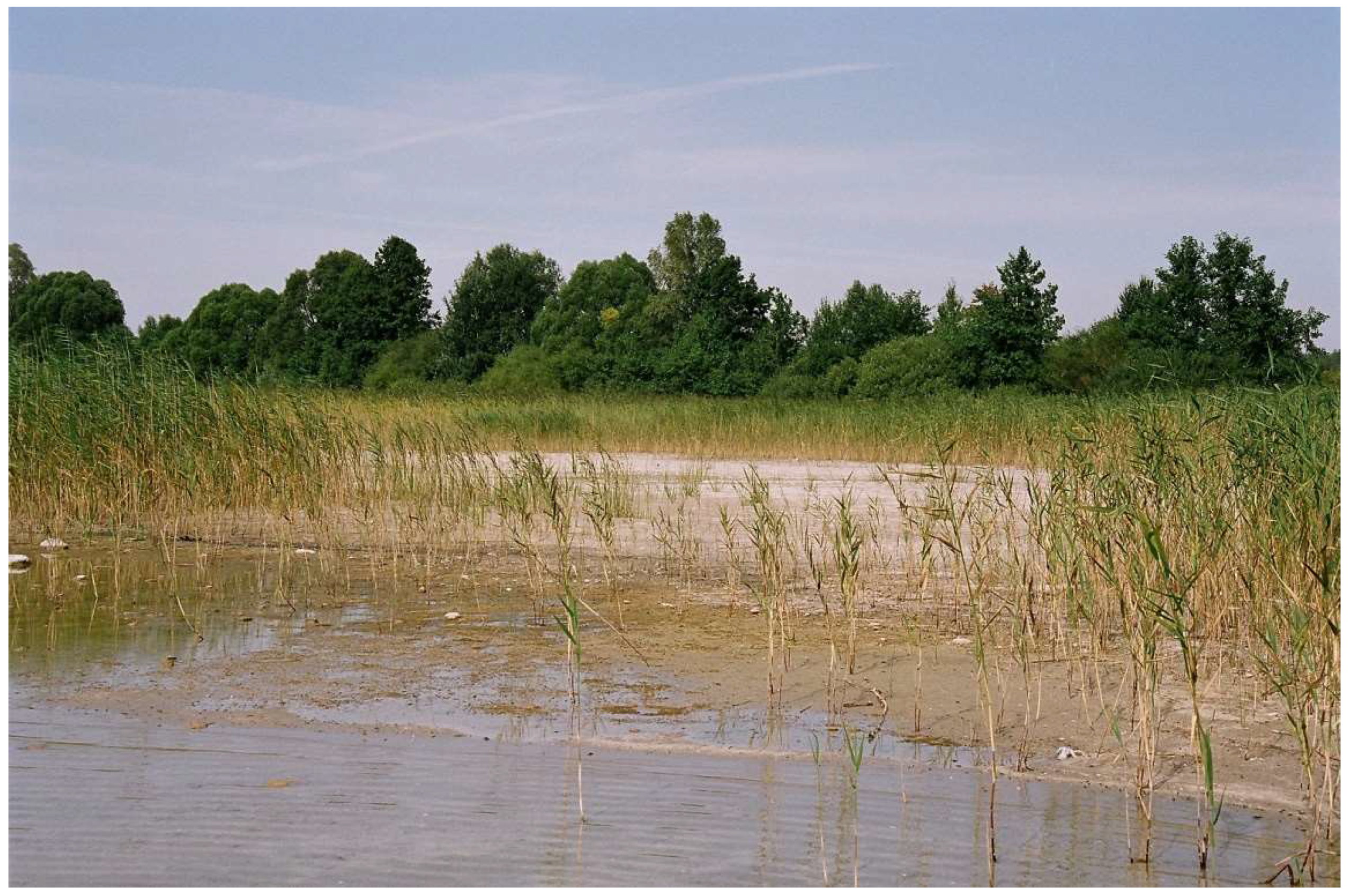 Water Free Full Text The Influence Of Hydrometeorological Conditions On Changes In Littoral And Riparian Vegetation Of A Meromictic Lake In The Last Half Century Html